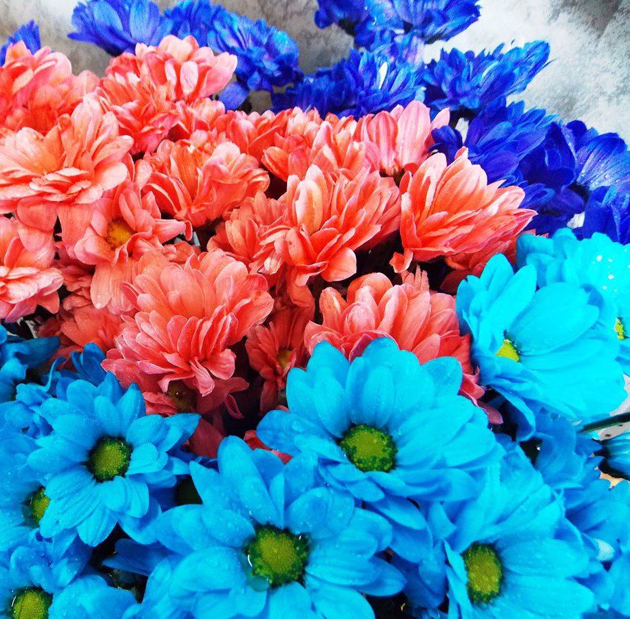 Хризантемы цветные
